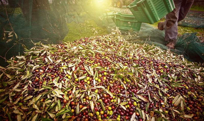 Productos fitosanitarios para el cuidado del olivar